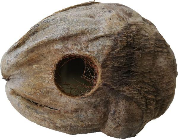 Halbe-Kokosnuss-Schale_1
